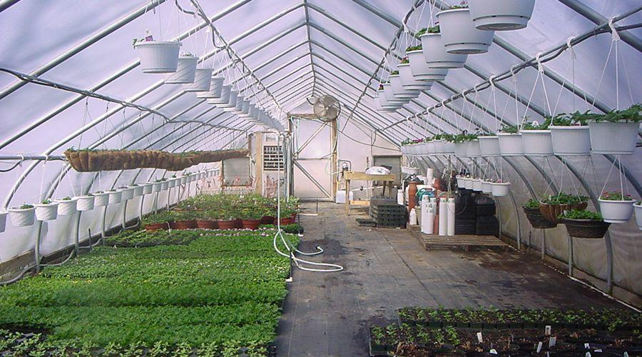 Coldframe Greenhouse