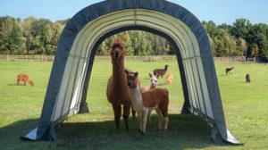 Equine Shelter Run-in-Shed