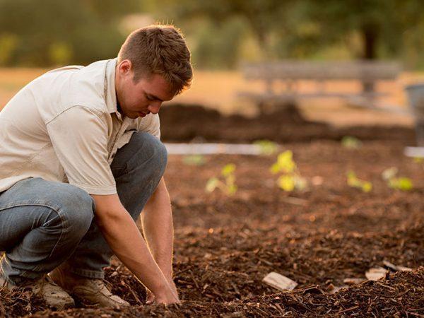 Garden Prep