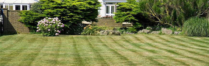 greener grass simple landscaping ideas