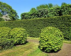 privacy plants backyard landscaping