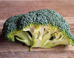 Winter Gardening Broccoli Cold Frame